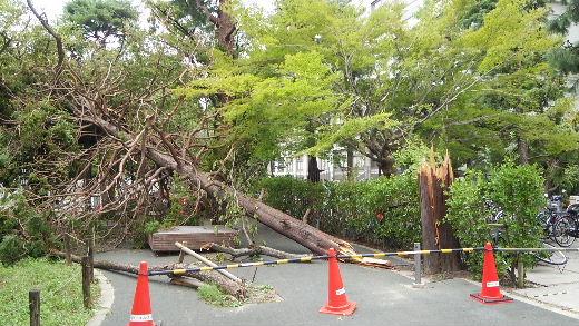 Tree(1).JPG